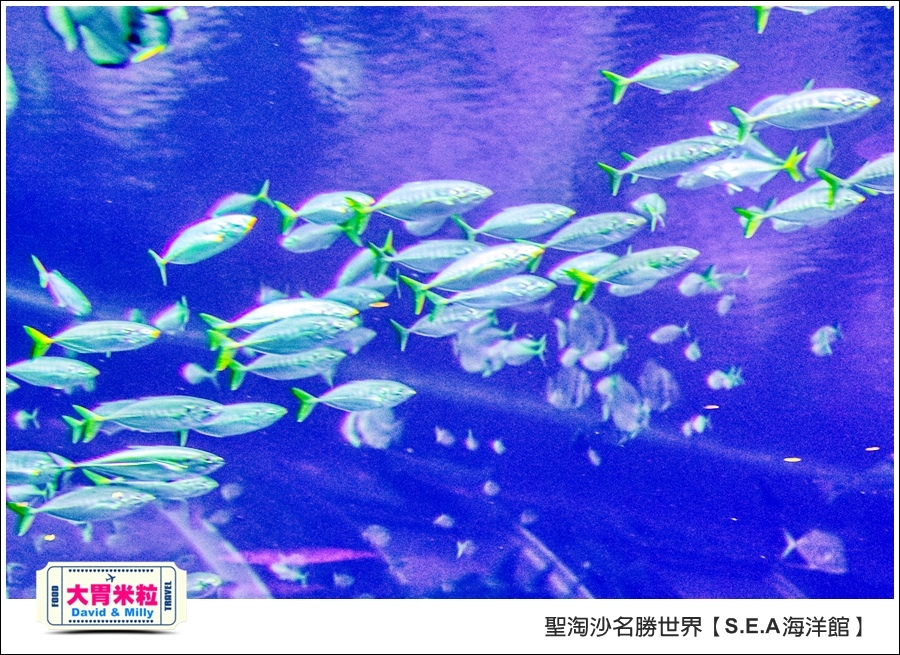 聖淘沙名勝世界必玩@SEA海洋館與海之味餐廳@大胃米粒001 (74).jpg