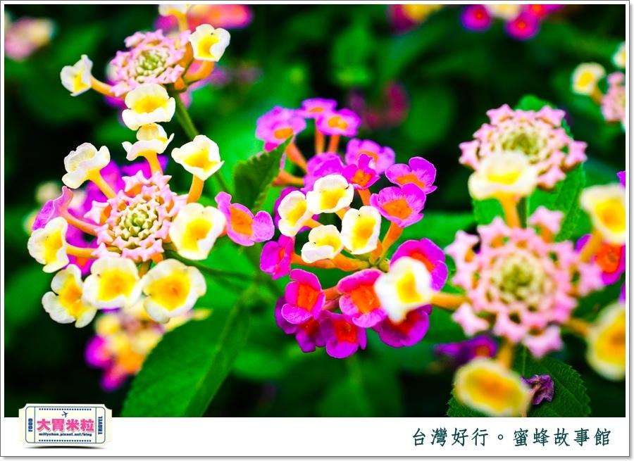 台灣好行雲林斗六古坑線-蜜蜂故事館@大胃米粒0046.jpg